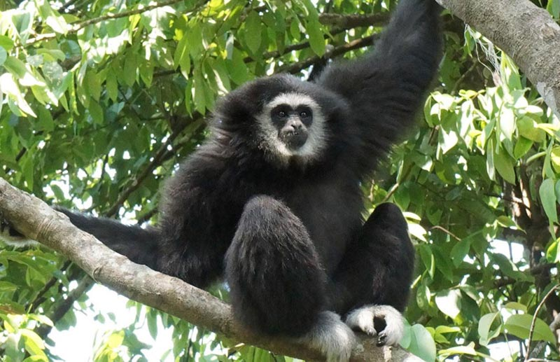 Flight of the Gibbon Pattaya