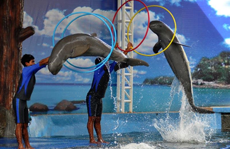 pattaya-dolphins-world-01