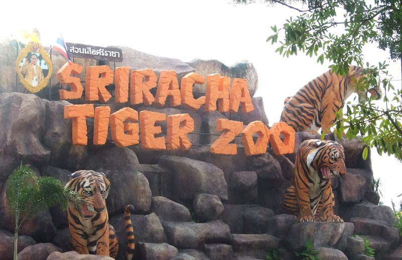 Click to enlarge image sriracha-tiger-zoo-01.jpg